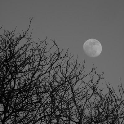 moon trees 2