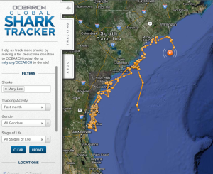 Ocearch Global Shark Tracker