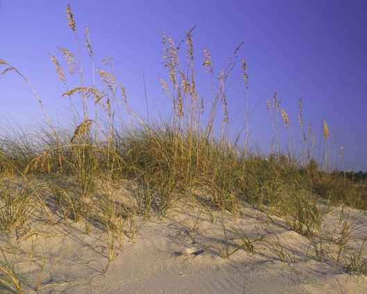 sand-dune-with-grass-on-it