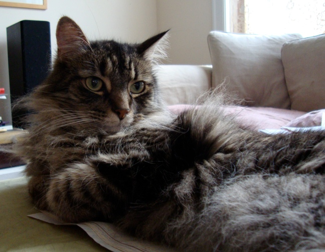 Duncan reclining